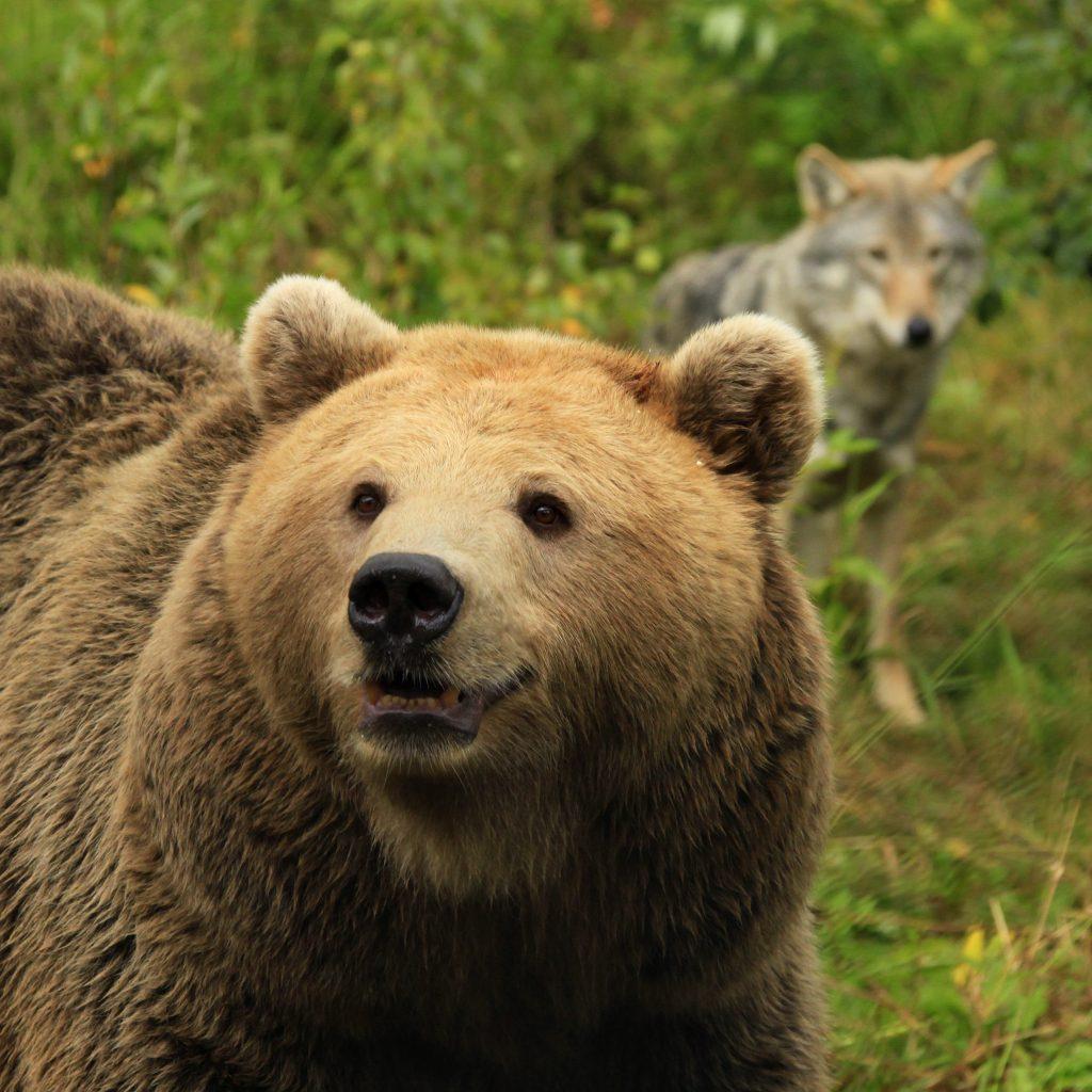 Bjørn Bear