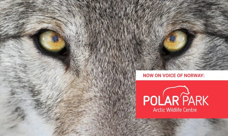 Polar Park Arctic Wildlife Centre Audioguide Lydguide Zoo